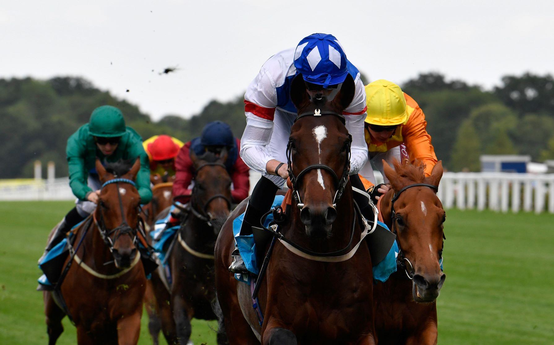 King george horse race 2021 betting online online football betting tricks