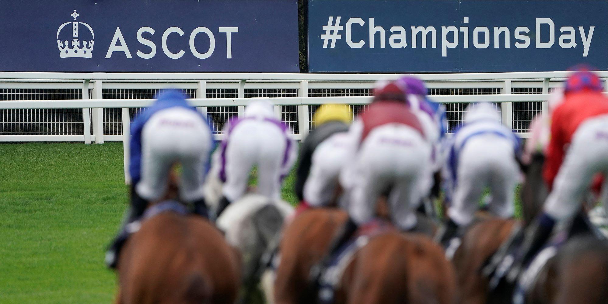 Ascot champions day betting websites falcons vs saints betting odds